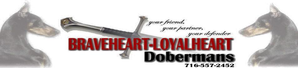 Braveheart Loyalheart Doberman Pinscher Breeder In New York